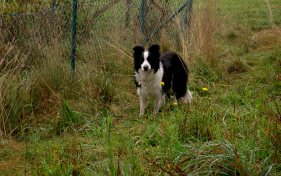 Spoty (2)