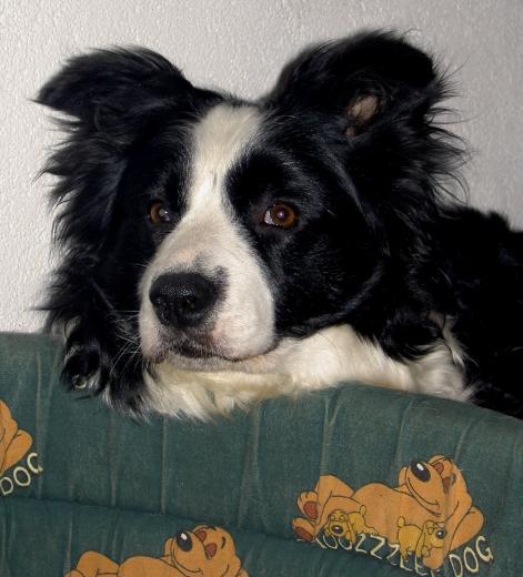 Spoty (4)