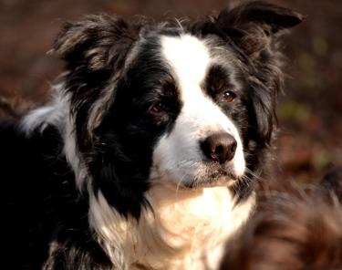 Spoty (7)