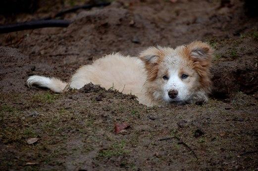 Boogie_puppy (14)