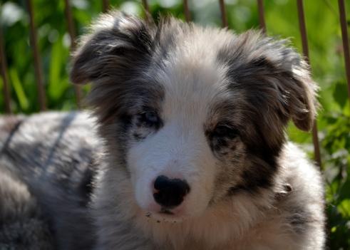 Kleenex_puppy (3)